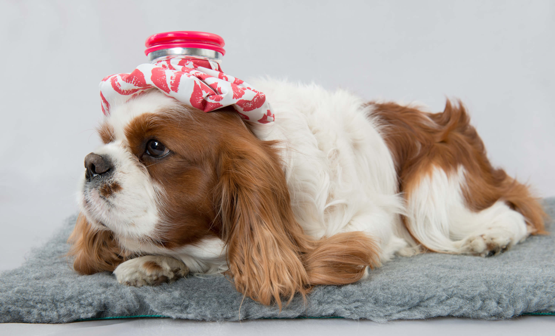 Een annuleringsverzekering geeft vaak ook dekking als je huisdier ziek is.
